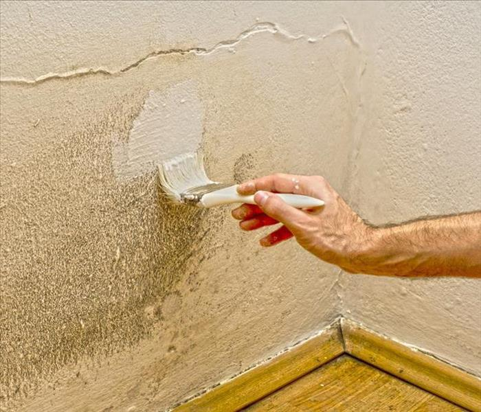 Mold Remediation 5 Mold Remediation Don'ts to Avoid